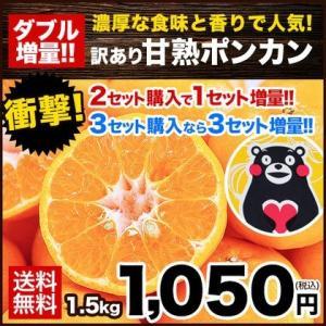 甘熟ポンカン 1セット1.5kg 送料無料 2セットで1セット分おまけ 大中小サイズ無選別 訳あり 複数購入はおまとめ配送 2月上旬-2月末頃より出荷
