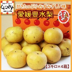 「訳あり豊水梨3×4」訳あり 梨 愛媛産 豊水梨 12kg 送料無料,のしギフト対応不可|kuniyasu-seika