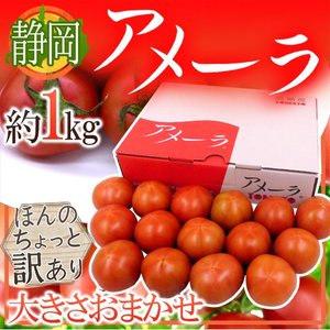 """静岡県 """"高糖度フルーツトマト アメーラ"""" 大きさおまかせ ..."""