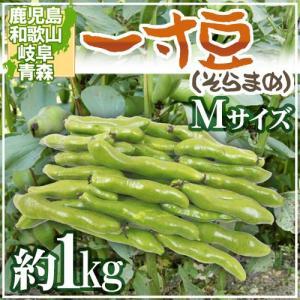 """九州・和歌山産他 """"一寸豆(そら豆)"""" Mサイズ 約1kg【予約 4月以降】"""