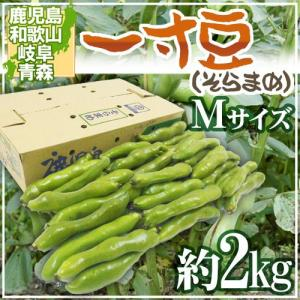 """九州・和歌山産他 """"一寸豆(そら豆)"""" Mサイズ 約2kg【予約 4月以降】"""