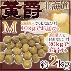 """【送料無料】北海道 北見産 じゃがいも """"黄爵"""" 約2kg ..."""
