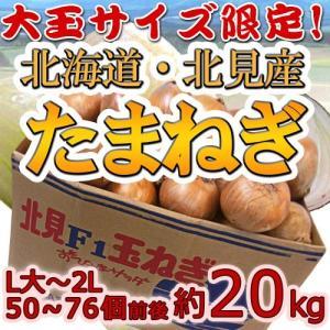 """【送料無料】北海道 北見F1 """"たまねぎ"""" 約20kg 大玉L〜LLサイズ 秀品"""
