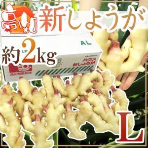 """高知・和歌山県産 """"新しょうが"""" 秀品 Lサイズ 約2kg【予約 3月下旬以降】"""
