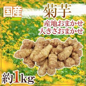 """【送料無料】""""菊芋"""" 約1kg 大きさおまかせ 産地厳選 キクイモ【予約 11月〜2月前後】"""