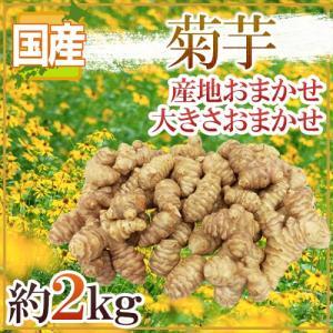 """【送料無料】""""菊芋"""" 約2kg 大きさおまかせ 産地厳選 キクイモ【予約 11月〜2月前後】"""