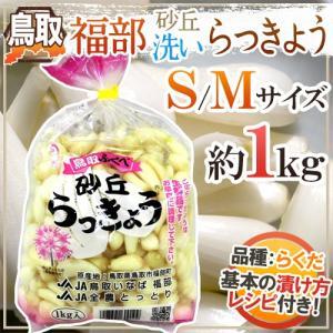 """洗いらっきょう 鳥取 JAいなば 福部産 """"砂丘らっきょう"""" S/Mサイズ 約1kg《5キロ購入で送料無料》【予約 6月中旬以降】 kurashi-kaientai"""