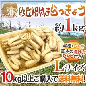 """土らっきょう 鳥取産 """"砂丘らっきょう"""" Lサイズ 約1kg 10キロ購入で送料無料!【予約 5月末〜6月】"""