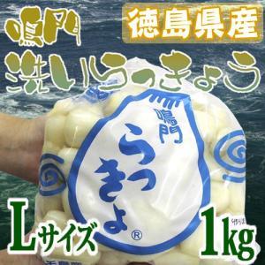 """徳島 鳴門産 """"洗いらっきょう"""" 秀品 約1kg Lサイズ《5キロ購入で送料無料》【予約 5月下旬以降】 kurashi-kaientai"""