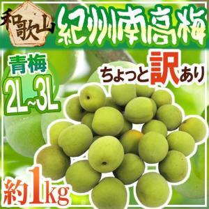 ブランド梅産地・紀州和歌山の《南高梅》種が小さく肉厚で柔らかい!梅酒や梅ジュースなどに最適な青め♪ち...