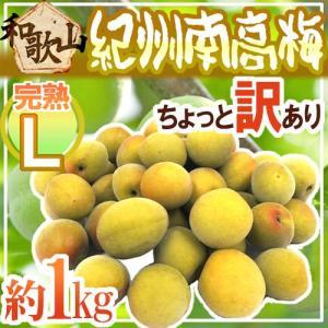 ブランド梅産地・紀州和歌山の《南高梅》種が小さく肉厚で柔らかい!甘い香りがたまらない梅干しに最適な熟...