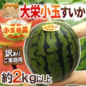 """鳥取県 """"大栄小玉スイカ 姫甘泉"""" 訳あり 1玉 約2kg以..."""