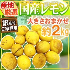 """【送料無料】""""完熟国産レモン"""" 訳あり 約2kg 大きさおまかせ 産地厳選【予約 8月以降】 kurashi-kaientai"""