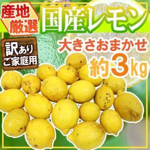 """【送料無料】""""完熟国産レモン"""" 訳あり 約3kg 大きさおまかせ 産地厳選【予約 8月以降】 kurashi-kaientai"""