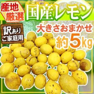 """【送料無料】""""完熟国産レモン"""" 訳あり 約5kg 大きさおまかせ 産地厳選【予約 8月以降】 kurashi-kaientai"""