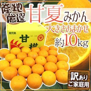 """【送料無料】""""甘夏みかん"""" 訳あり Lサイズ以上 約10kg..."""