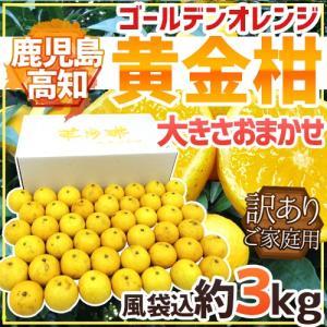 """【送料無料】鹿児島・高知産 """"黄金柑"""" 訳あり 約3kg 大..."""