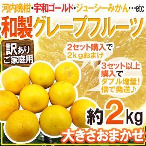 """【送料無料】""""和製グレープフルーツ"""" 約2kg 訳あり 2セット購入で2kgおまけ、3セット以上購入..."""