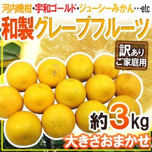 """【送料無料】""""和製グレープフルーツ"""" 約3kg 訳あり 大き..."""