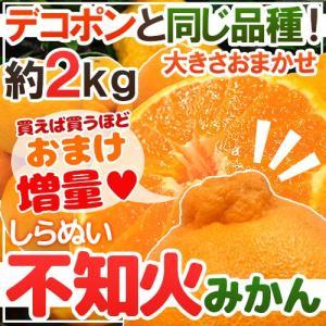 """有田産 """"不知火(訳ありデコポン)"""" 大きさおまかせ 約2kg《2組購入で送料無料、3組で2kg、4組で4kg、5組で6kg、6組で8kgおまけ》【予約 2月下旬〜3月】"""