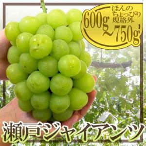 """岡山産 """"瀬戸ジャイアンツ"""" 大房600g〜750g 最安値..."""