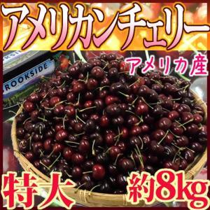 """【送料無料】アメリカ産 """"アメリカンチェリー"""" 特大 約8kg【予約 5月下旬以降】 kurashi-kaientai"""