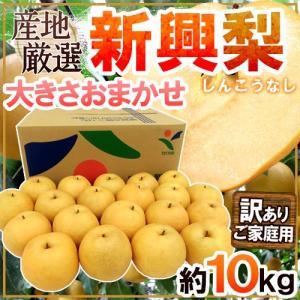 【送料無料】二十世紀梨の血を継ぐ大玉梨!!甘いだけでなく、爽やかな酸味と歯切れの良い食感が特徴の「赤...