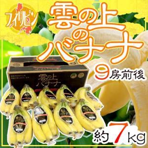 """フィリピン 超高地栽培 """"雲の上のバナナ"""" 9房前後 約7kg 1箱 プレミアムバナナ"""