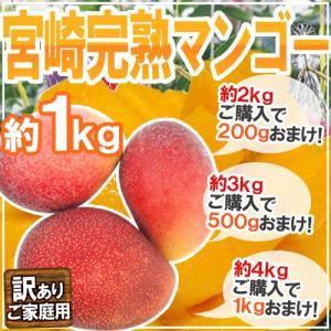 """【送料無料】""""宮崎マンゴー"""" 訳あり 2〜4玉前後 約1kg..."""