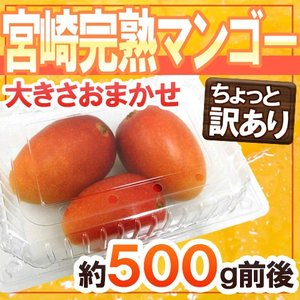 """ちょっと訳あり """"宮崎完熟マンゴー"""" 大きさおまかせ 約50..."""