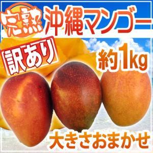 """【送料無料】沖縄産 """"完熟マンゴー"""" 約1kg 訳あり【予約..."""