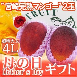 """母の日ギフト """"宮崎マンゴー"""" 超特大玉4L 2玉 カーネー..."""