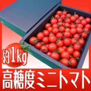 """フルーツミニトマト """"キャロルセブン"""" 約1kg 化粧箱入り 和歌山産【予約 11月以降】"""
