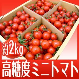 """【送料無料】フルーツミニトマト """"キャロルセブン"""" 約2kg 和歌山産【予約 11月以降】"""
