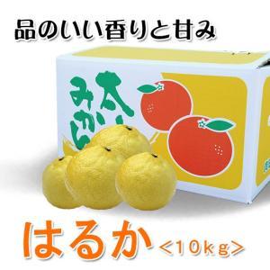 【みかん】はるか 家庭用10kg箱入り【減農薬】|kureme