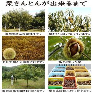 岐阜県 中津川 栗きんとん 10個箱入 和菓子 栗 取り寄せ kuriya 09