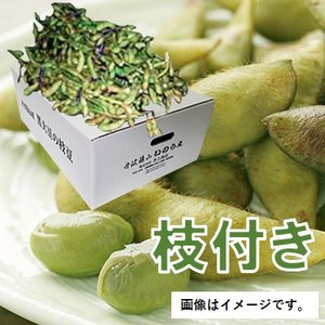 【ご予約商品】丹波 黒豆の枝豆【枝付き】約1kg×3束(2020年10月中旬からのお届け)|kuromame