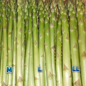 アスパラガス 1kg 新潟産 A級 LL〜M 農家朝採り グリーンアスパラガス 予約|kuwaharasyoten
