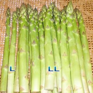アスパラガス 1kg アスパラ 送料無料(A級L〜2L混合)グリーンアスパラ 新潟産 鮮度が自慢|kuwaharasyoten