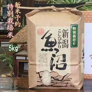 新米 30年産 魚沼産コシヒカリ 5kg【特別栽培米】2018年度産 一等米 白米 予約|kuwaharasyoten