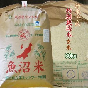 新米 30年 魚沼産コシヒカリ 玄米 30kg 予約 特別栽培米 2018年産 一等米|kuwaharasyoten