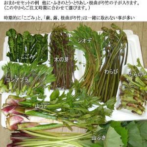 山菜 山菜セット 5〜6種(お買い得 山菜天ぷら たっぷり9〜10人位家族全員で楽しめる量)ご予約開始