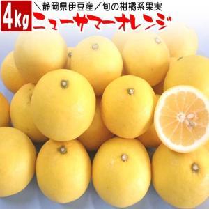 伊豆産の柑橘系の旬の果実、果物が今年も時期となりました。 ニューサマーオレンジ(静岡県伊豆産)宅配便...