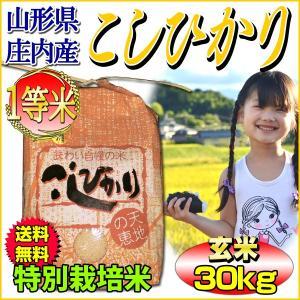 コシヒカリ 一等米 山形県庄内産 玄米30kg (10kg×...