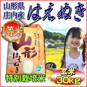 米 29年産 はえぬき 山形県庄内産 一等米 玄米30kg ...
