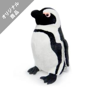 ケープペンギン特大|kyoto-aquarium