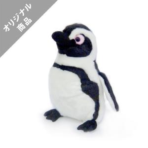 ケープペンギンM|kyoto-aquarium