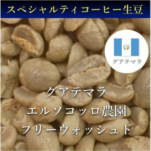 コーヒー生豆 コーヒー 珈琲 1kg グアテマラ エルソコッロ フリーウォッシュド kyoto-coffee