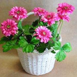 造花の鉢植え お花が溢れるガーベラ 御祝い用推奨品|kyoto-flower
