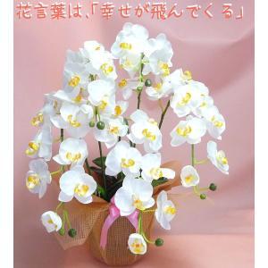 開店開院におすすめコチョウラン ピュアホワイト色 5本立ち|kyoto-flower